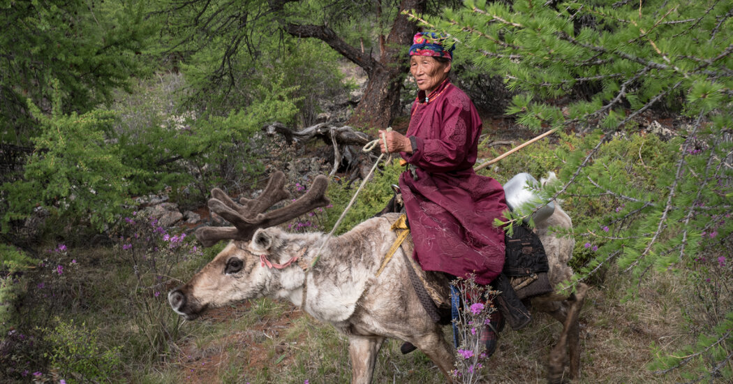 On the Move With Mongolia's Nomadic Reindeer Herders